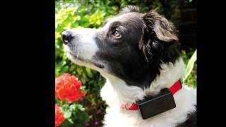 Shock Collars For Dogs Review Discount - Best Dog Shock Collar With Remote