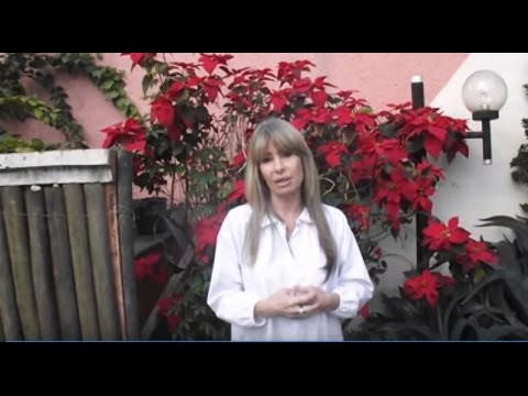 Escola Técnica Sobrancelha Geometrica from YouTube · Duration:  31 seconds