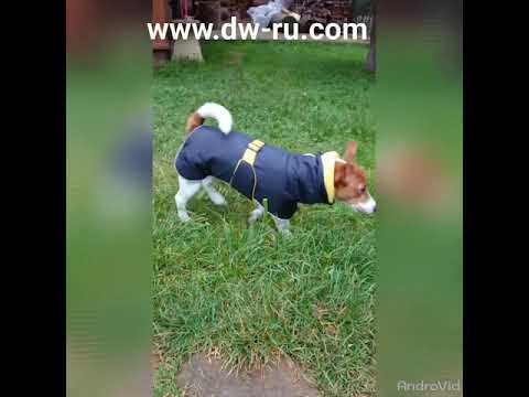 DW. попона для собак NOW BOND OPEN