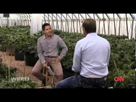 CNN documentary on Charlotte's Web, medical marijuana treating seizure disorders
