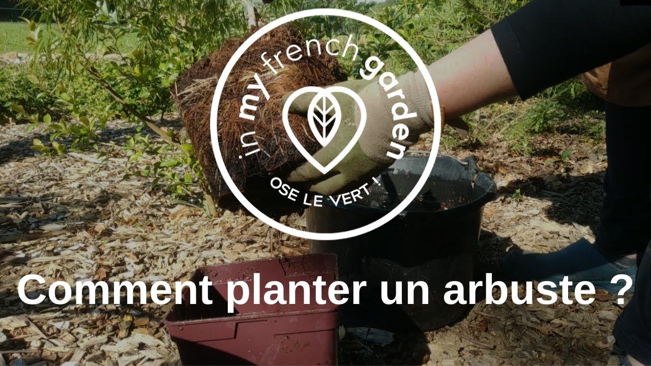 Comment planter un arbuste en pleine terre ? - YouTube