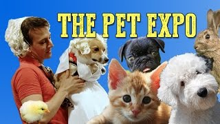 Video Social Disorder - The Pet Expo Competition | Rooster Teeth download MP3, 3GP, MP4, WEBM, AVI, FLV Juli 2018