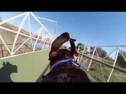 Slow Motion GoPro Dog Jumps Into Lake