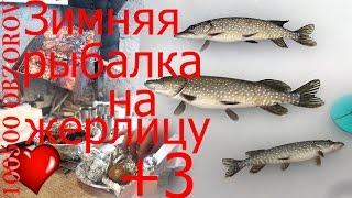 Щуки Сошли с Ума! Просто Нереальный Клев Щуки на Жерлицы (Рыбалка Видео)