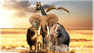 Мир животных [трейлер]