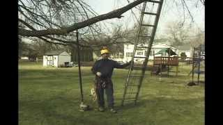 using ladders for tree work