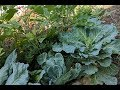 Permaculture Front Yard Garden Tour   September 2017