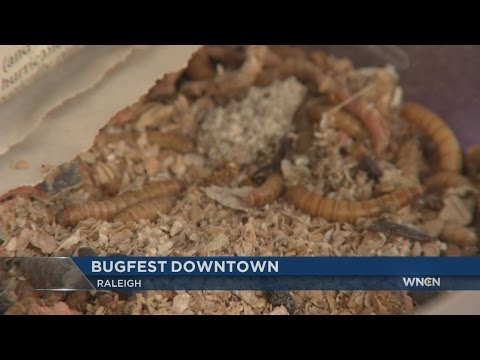 BugFest invades downtown Raleigh