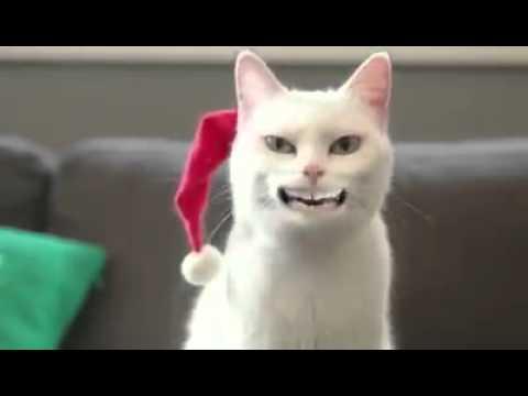 Singende Katze  yingel balls