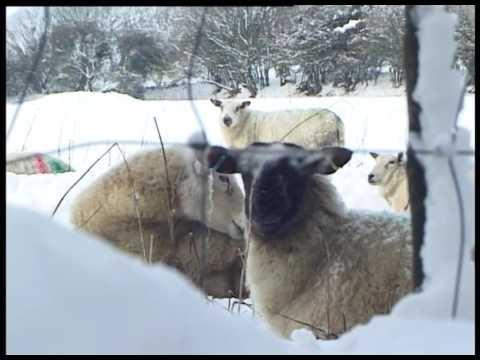 Ynys Môn/Anglesey snow 18/01/2013