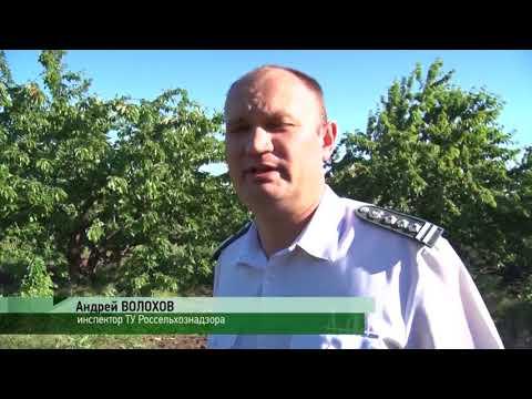 Выкорчёвка старого сада в Азовском районе Ростовской области