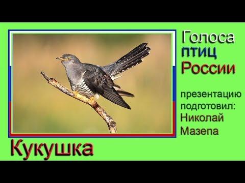 Перелётные и зимующие птицы списки