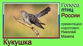 Кукушка. Голоса птиц России
