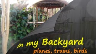 Planes, Trains, Birds,, for your Daily Meditation / relax and enjoy