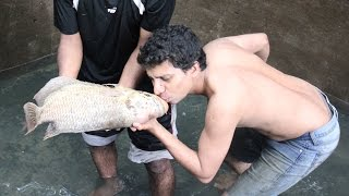 Large quantity Kerala Delicious Farm fish giant gourami, albino tiger shark, sucker fish & many more