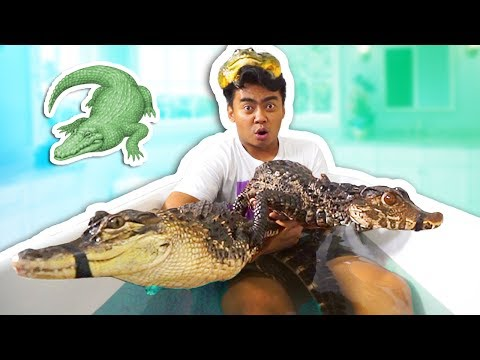Thumbnail: ALLIGATOR BATH CHALLENGE!