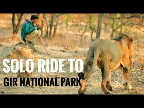 Diu to gir national park to udaipur solo ride Day 5 | gujarat tourism | girvan