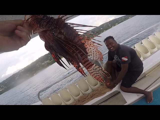 Stung by a Lionfish & Can Lionfish Fly ?