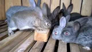 Кролики точат хлеб. Прикол. mp4