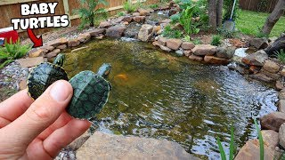 2-baby-turtles-get-first-home-in-my-pond
