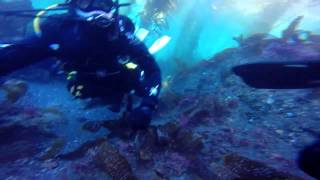 Anacapa Island scuba diving certification Ventura Dive boat Spectre