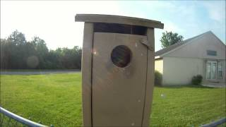 Baby Blue Birds leaving their nest Box