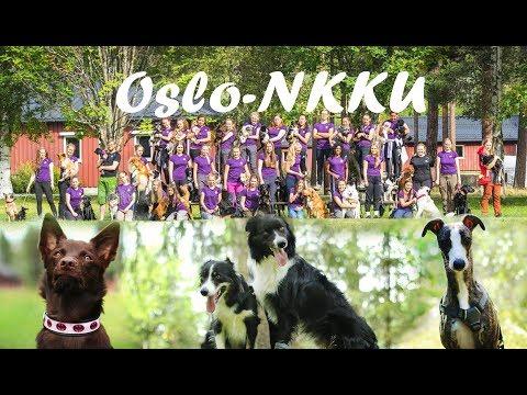 Summer 2017 ❥ Oslo & NKKU