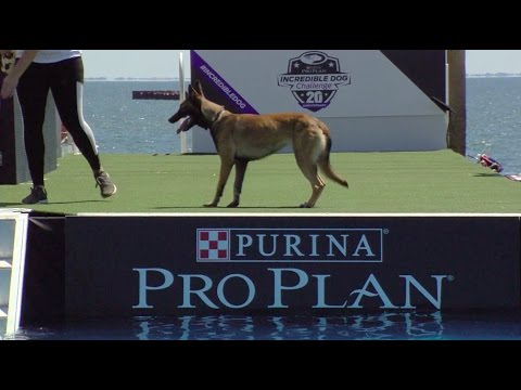 Full Diving Dog Competition - 2017 Purina® Pro Plan® Incredible Dog Challenge® Eastern