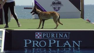 Full Diving Dog Competition  2017 Purina® Pro Plan® Incredible Dog Challenge® Eastern