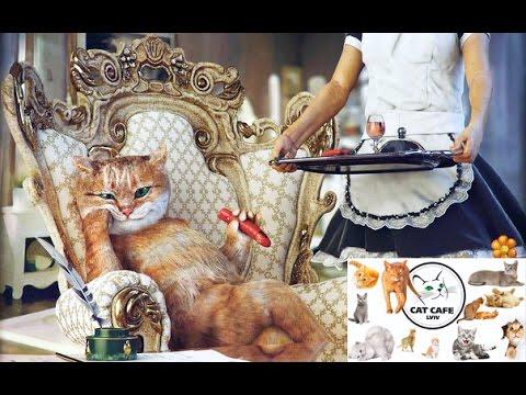 Cat Cafe Lviv