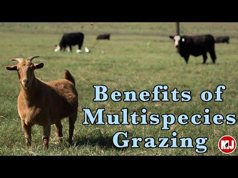 Benefits Of Multi-species Grazing  | May 10, 2019