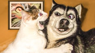 Awesome Funny  Dogs And Cats    Funniest And Cute Pet Videos