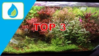 TOP 3 TIPS TO A SUCCESSFUL PLANTED TANK
