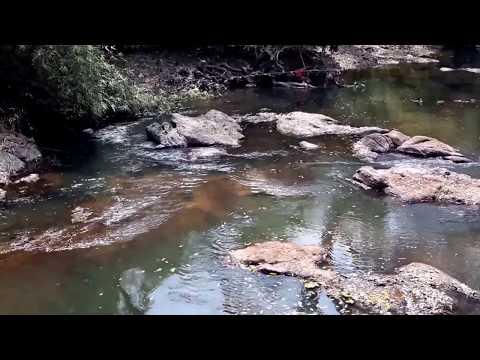 Oshun - Oshogbo River