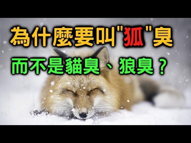 為什麼狐臭要叫