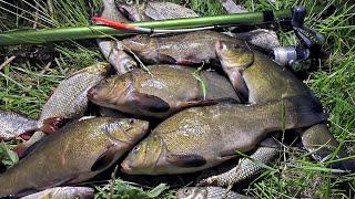 Ловля ЛИНЯ на ПОПЛАВОК ПЕРО рыбалка в камышах на сельском пруду