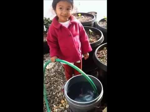 Greenhouse Urbin Growers and Wicky Growers