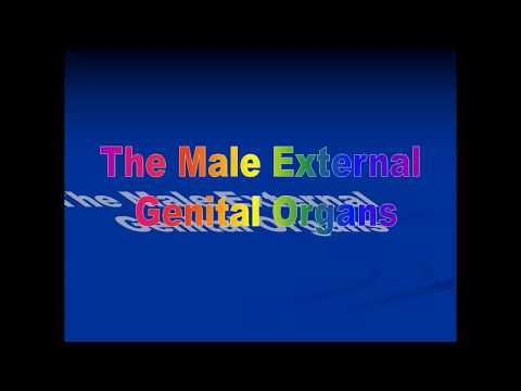 Anatomy Lecture on MALE EXTERNAL GENITAL SYSTEM (Penis & Scrotum)