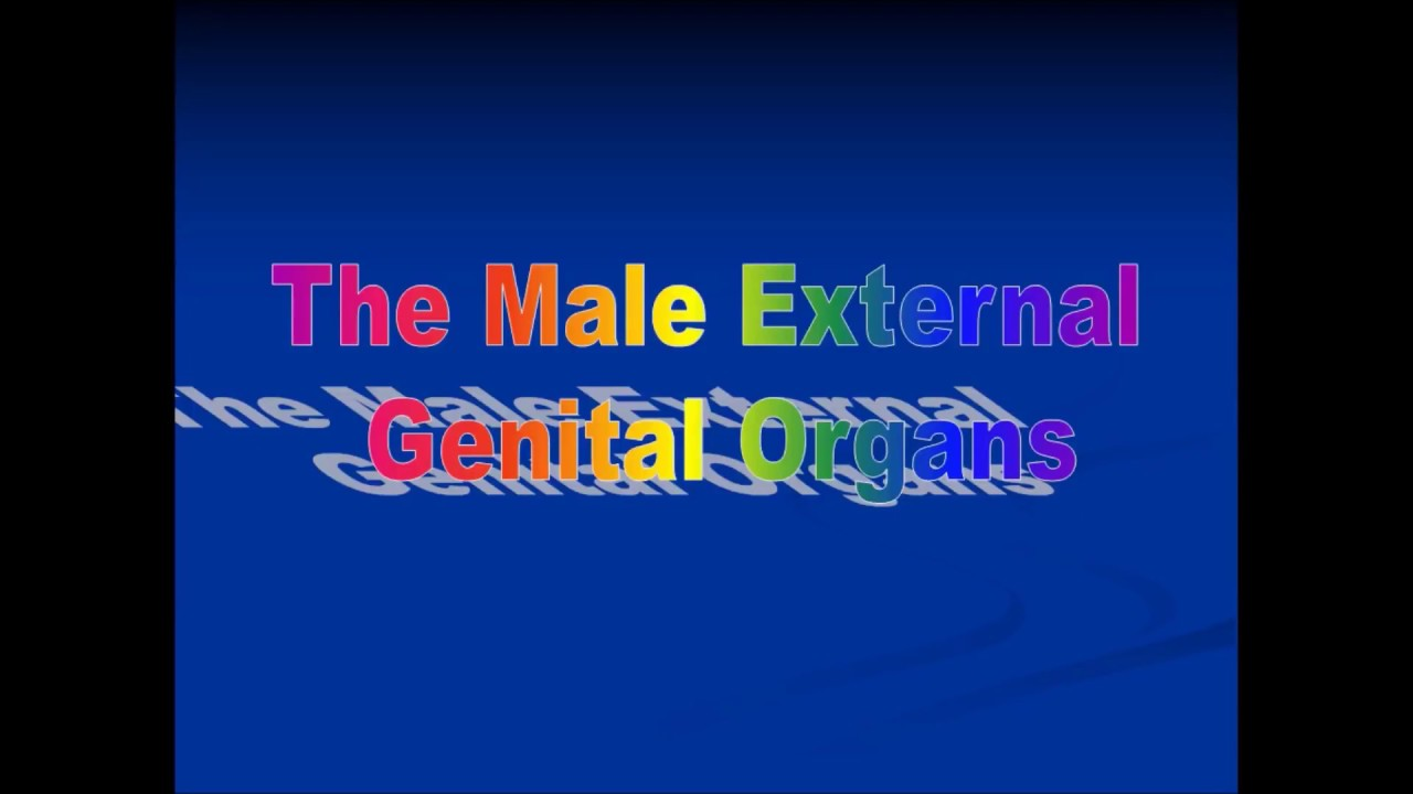 Anatomy Lecture on MALE EXTERNAL GENITAL SYSTEM (Penis & Scrotum ...