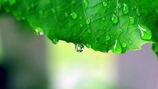 ฝนตกที่หน้าต่าง - LOSO