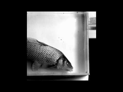 XROMM: Fish Feeding: Light video of jaw protrusion in common carp