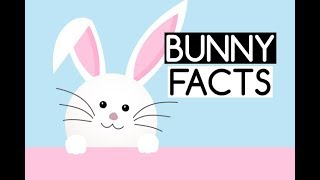 10 Fun Facts about Animal Rabbits or Bunnies for Kids