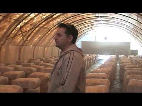 ΕΠΑΛ Καλλονής Καλλιέργεια Μανιταριών Λέσβος.wmv