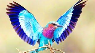 burung hias terindah