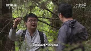 《地理·中国》 20191213 探秘热带雨林5| CCTV科教