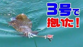 離島春イカ合宿ラスト(マイファスコラボ#9) thumbnail