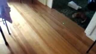 Котом тоже можно играть в боулинг / Cat, too, can play bowling :)