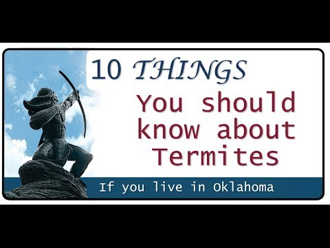 5 Super Interesting Facts About Termites!