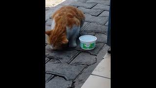 Kedi boğazına kemik takılınca