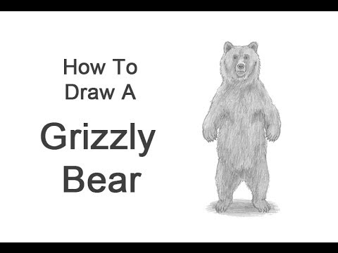 Standing Grizzly Bear Drawings Realistic | www.pixshark ...